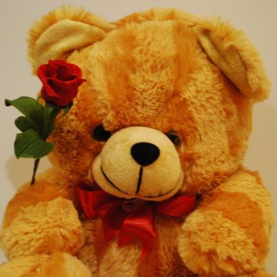 Teddy Holding a Red Rose